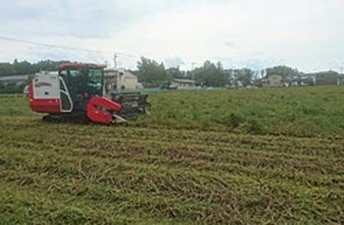 自社栽培 鈴木農園